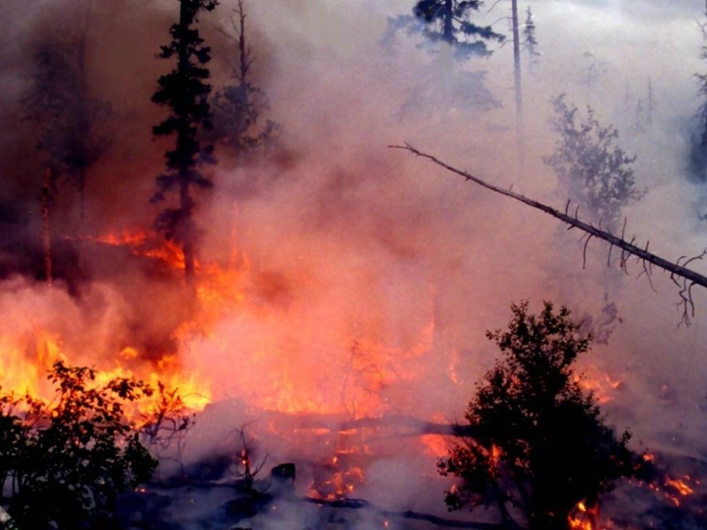 Фотки сибирь горит