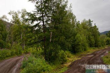 В Грузии выявили более 200 фактов незаконной вырубки деревьев