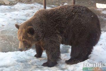 Ташкент прокомментировал убийство российским охотником краснокнижного медведя