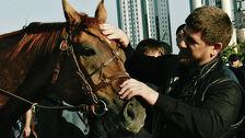 Лошади Кадырова будут работать на себя