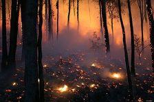 Крупный лесной пожар локализован на юге Грузии