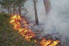 На востоке Азербайджана горит лес