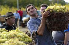 Армянских виноградарей снова оставили с носом