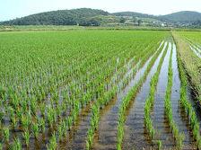 Адыгея откорректирует госпрограмму развития сельского хозяйства