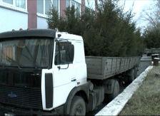 В Карачаево-Черкесии задержан КАМАЗ с нелегальными новогодними елками