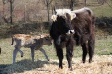 Кабардино-Балкария, Дагестан, Ставрополье и Чечня получат субсидии на животноводство