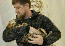 Магаданский губернатор захотел подарить Кадырову кота