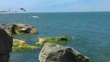 Прокуратура Махачкалы взялась за шлагбаумы у моря