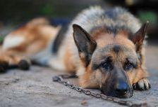 Житель Краснодара хотел помириться с женой и поджег собаку