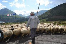 Грузинские спасатели вытащили упавшего в овраг пастуха