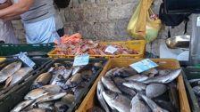 Площадь рыбоводных участков Дагестана увеличится в этом году почти на 11%