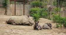 В Тбилисский зоопарк переселятся 22 животных из Европы