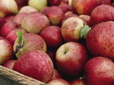 Россия не пропустила молдавские яблоки для Казахстана