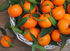 Абхазия обеспечит россиян мандаринами